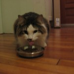 Switching Cat Food . . . Again