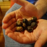Soap Nuts: A Natural Laundry Detergent